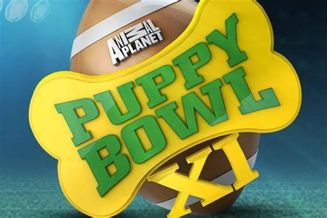 animal planet puppy live puppy bowl 2015 animal planet live photo