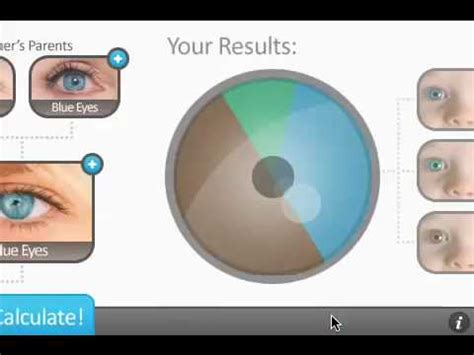 eye color calculator with grandparents myideasbedroom