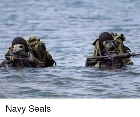 mexico navy seals 25 best memes about navy seals navy seals memes