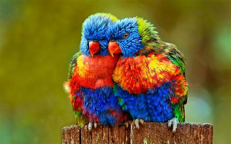 colorful bird pictures 30 bird pictures with most beautiful colors