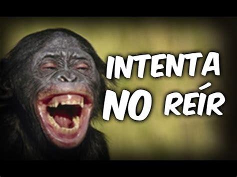 imagenes de videos chistosos videos graciosos animales chistosos y graciosos 03