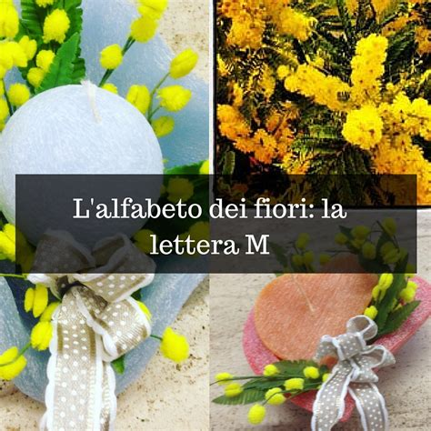 tulipano significato dei fiori fiori iniziano con la lettera m dell alfabeto e il