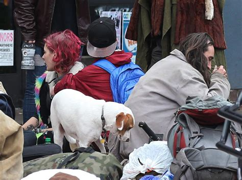 puppies eugene oregon eugene oregon bans dogs downtown for owners not living there the seattle times