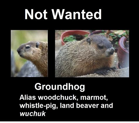 groundhog day japanese the principal undergardener the problem with groundhog day