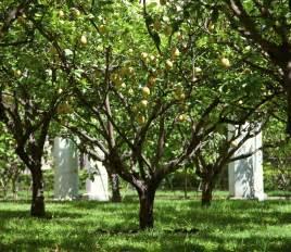 Climate Zones Gardening - lemon tree lifespan what is the average lifespan of lemon trees