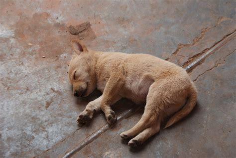 dead puppy um dead puppy pirate4x4 4x4 and road forum