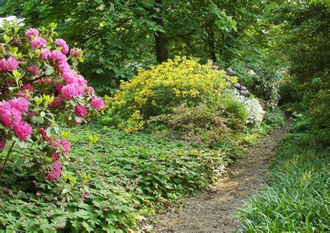 geranium platypetalum bodendeckergeranien unterpflanzung