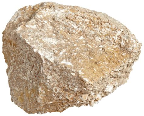 Sedimentary Rocks Related Keywords - Sedimentary Rocks ... Fossiliferous Sandstone