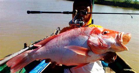 Mainan Fishing Mancing Ikan Pancing Ikan No 1308 Teknik Mancing Udang Hidup Check Out Teknik Mancing Udang Hidup Cntravel