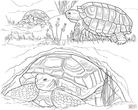 turtle eggs coloring page box turtle coloring pages