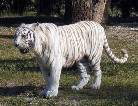 imagenes sorprendentes de animales extraños animais mam 237 feros 171 superespeciais