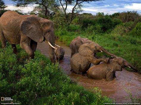 beautiful african animals safaris wildlife  africa