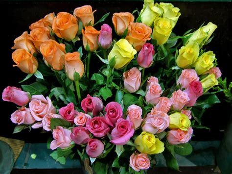 fiori per auguri di compleanno auguri floreali di buon compleanno pf67 187 regardsdefemmes