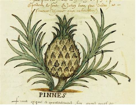 Research Paper On Pineapple by Index Www Lancs Ac Uk