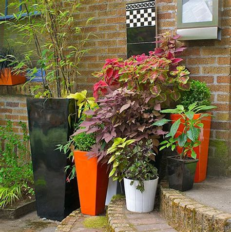 Patio Shade Plants by Container Gardens Made For The Shade Garden Design