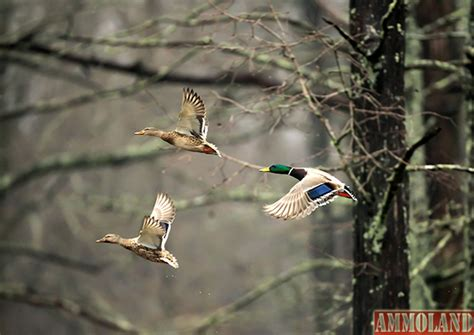 duck hunting boat death duck hunting tragedy in arkansas reminds hunters to stay