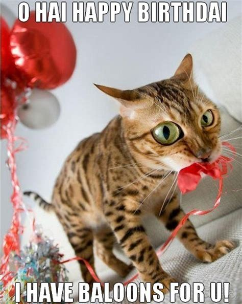 cat birthday cat birthday wishes wishes greetings pictures wish