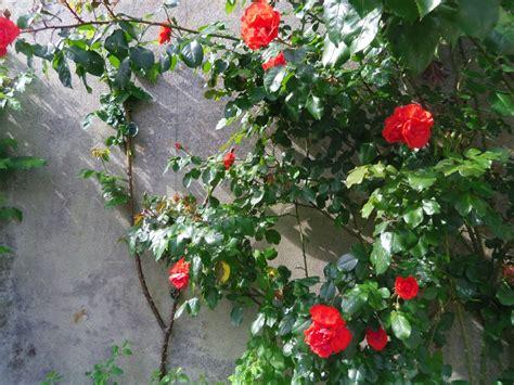 Habiller Mur Exterieur Avec Plantes by Habiller Ses Murs Ext 233 Rieurs Maison Jardin