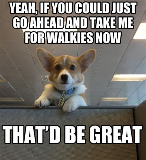 Dog Meme - dog work meme pictures to pin on pinterest pinsdaddy