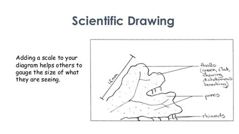 drawing biological diagrams scientific drawing overview