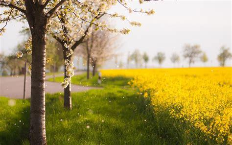 imagenes minimalistas naturaleza fondos de pantalla de paisajes naturales medioambiente y