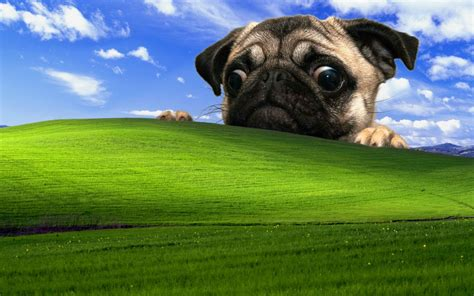 Office Space Windows Xp Background Pug Wallpaper For Desktop Background Wallpapersafari