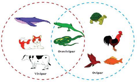 perkembangbiakan generatif  vegetatif hewan mikirbae
