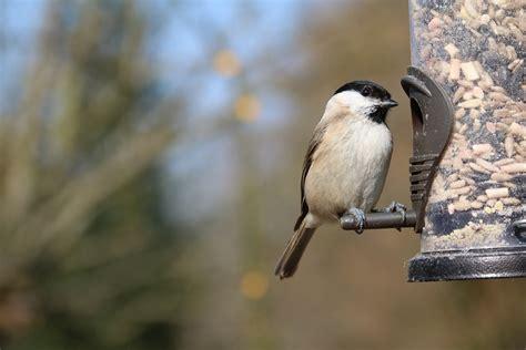 what do backyard birds eat bird feeder time factors affecting when birds eat the