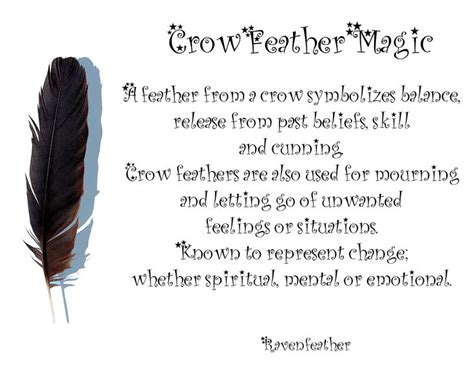25 Best Crow Feather Ideas On Pinterest Crow Or Raven Black Feather Meaning