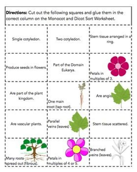 comparing monocots and dicots worksheet key monocot vs dicot worksheet abitlikethis