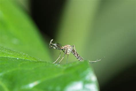 Get Rid Mosquitoes Backyard by Ways To Get Rid Of Mosquitoes Reliable Remodeler