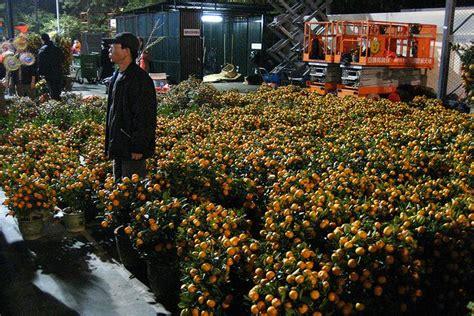 mandarin hong kong new year hong kong new year flower markets