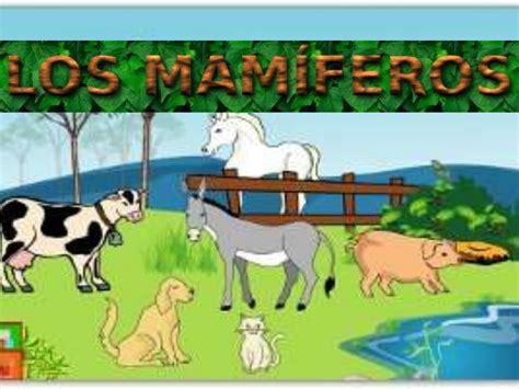 imagenes de animales vertebrados mamiferos mamiferos