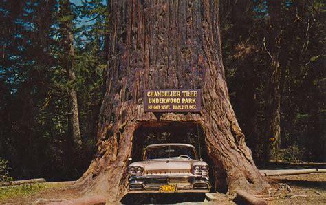 Chandelier Redwood Tree Chandelier Tree Of The Redwoods Underwood Park Californ Flickr