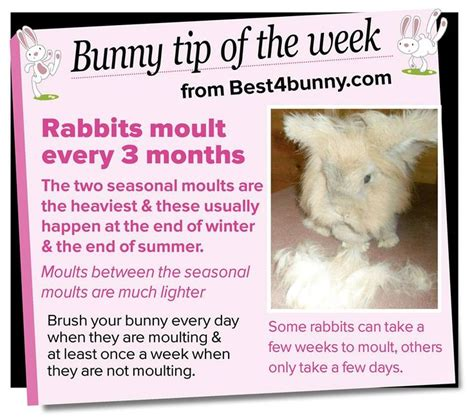 Must For The Week The House Bunny by 25 Best Ideas About Rabbit Shed On The House