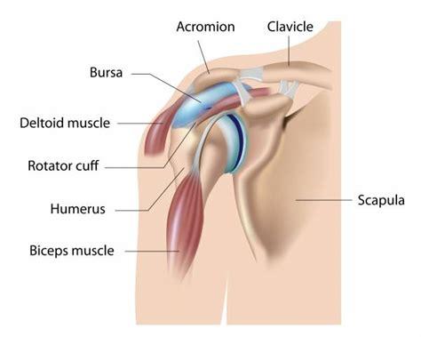 bench press muscles and joints used shoulder injury kettlebells for shoulder shoulder