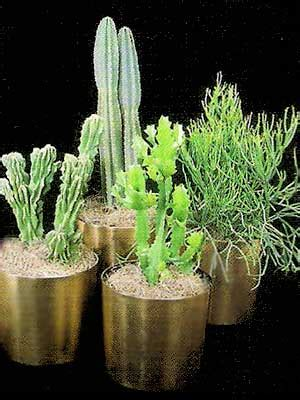 indoor plants gallery the potted plant scottsdale indoor plants gallery the potted plant scottsdale