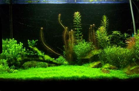 aquascaping ideas pinterest