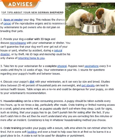 puppy tips image gallery puppy tips
