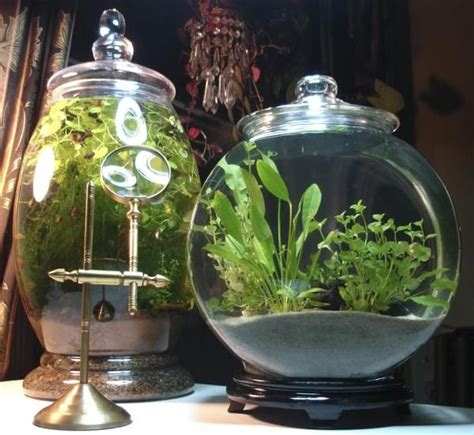 planted snail gardens  jar   left  changed