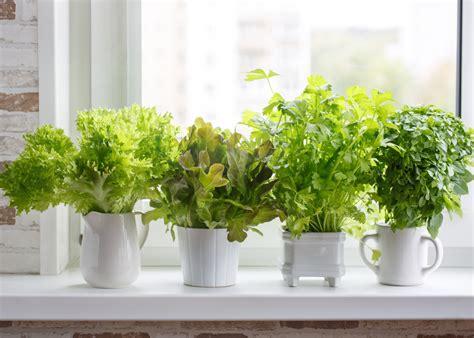 horta em apartamento consiga  sua sem problemas