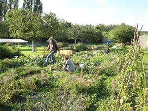 un jardin partag 233 un lien social les jardins de la