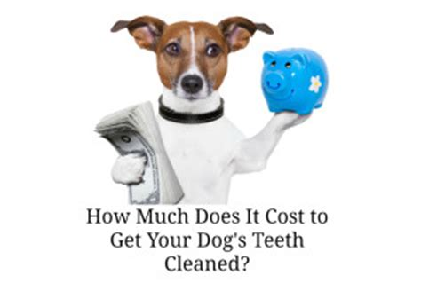 how much is it to get a puppy how much does it cost to get a s teeth cleaned