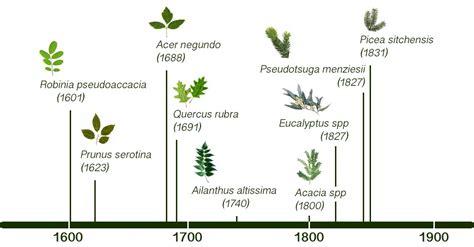 tree species european forest institute in focus