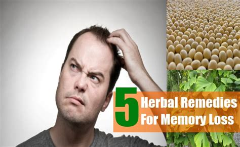 5 herbal remedies for memory loss best herbs for memory