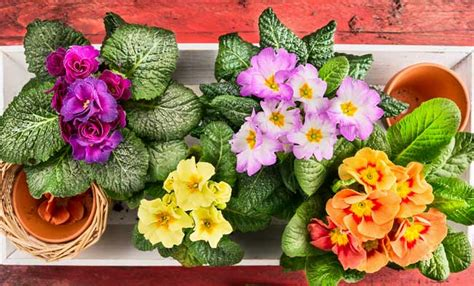 fiori perenni per giardino fiori perenni ecco i pi 249 belli da avere in giardino leitv