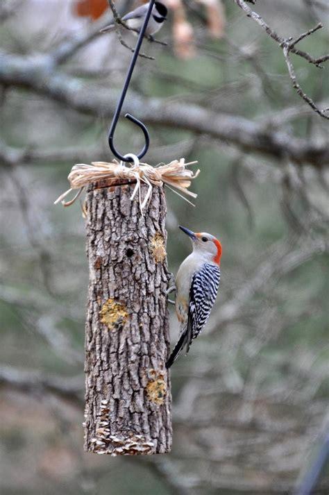rebecca s bird gardens blog diy suet feeders