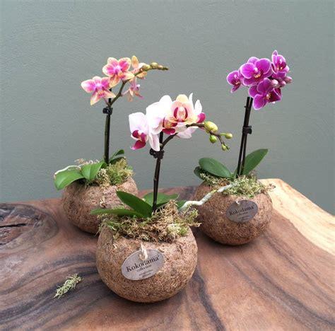 Pot Bonsai 25cm Wrn Hitam kokodama phalaenopsis florastore