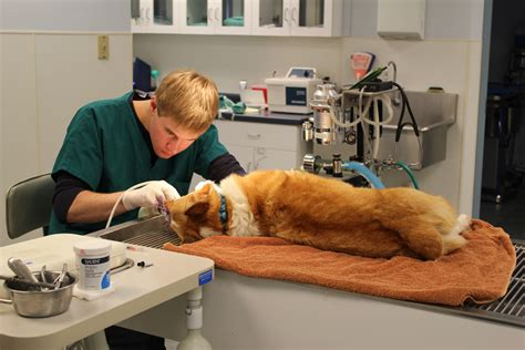 dental cleaning for dogs february is national pet dental health month