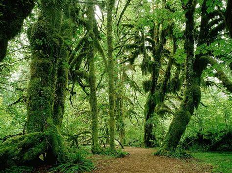 imagenes hd bosques nuevas im 225 genes hd de bosques fondos de paisajes